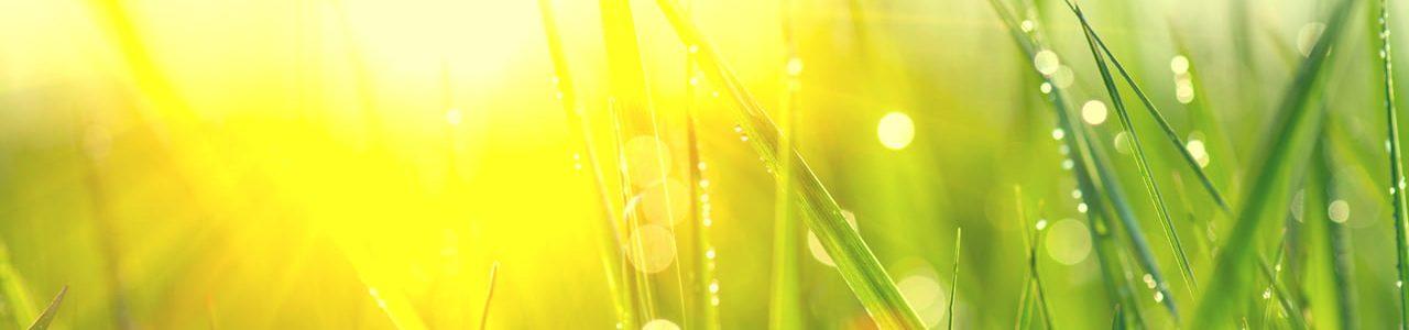 green grasses on sunny field