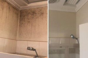 Mould remediation and Tile cleaning