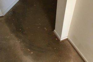 water damager carpet